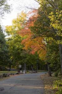 Road through East Rock Park